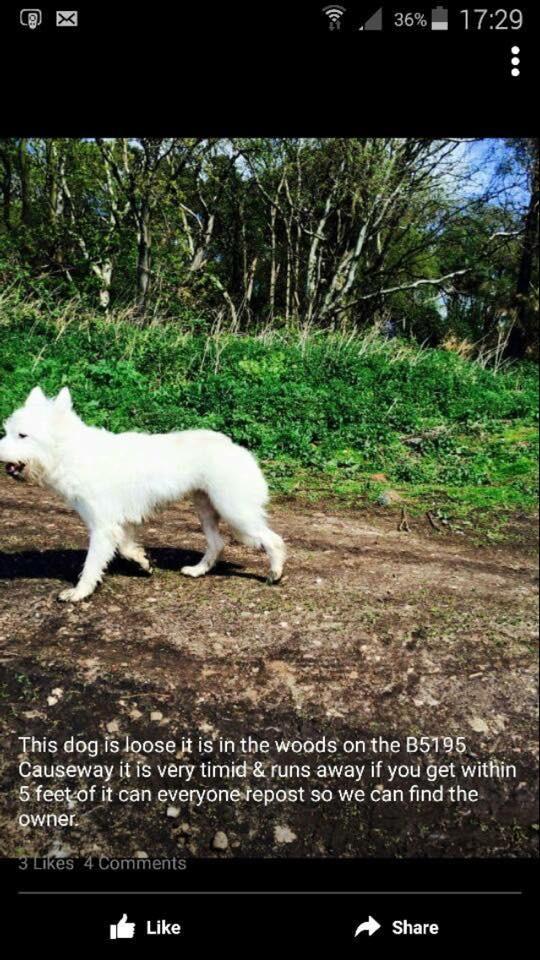 Dog in Altcar - stray.jpg