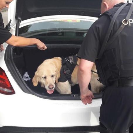Police Dog Champ helps Matrix conduct roadside checks