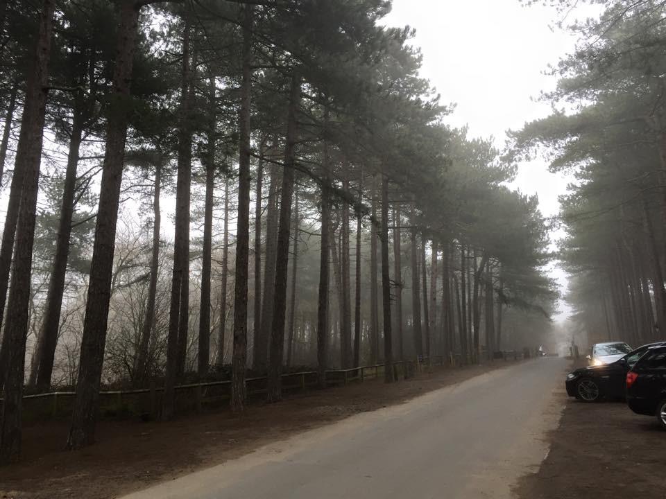 Pinewoods in the fog.jpg