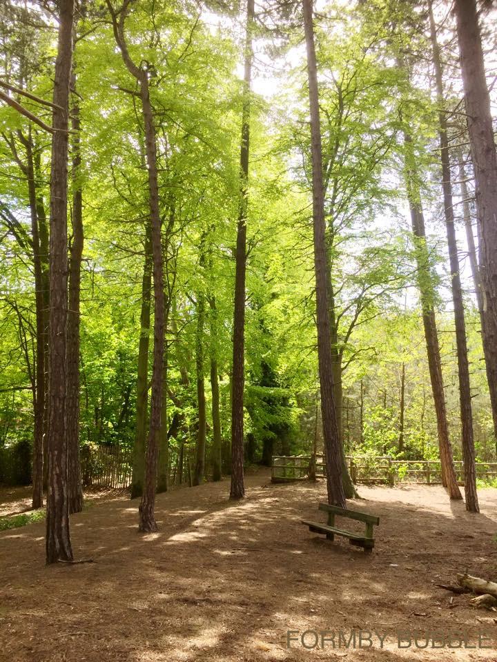 Formby Pinewoods.jpg