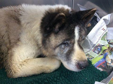 Rufford Veterinary group dog found.jpg