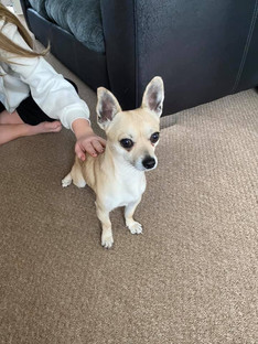 Anyone missing a dog, found on Kent road?