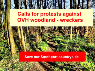Calls for protests against OVH threat to George Drive Woods grows