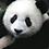"""Thumbnail: """"Panda-monium!"""""""
