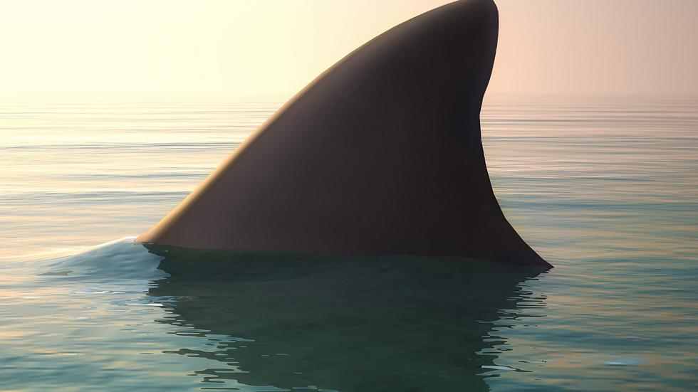 """Shark Tank"""
