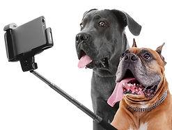 Funny dogs taking selfie on white backgr