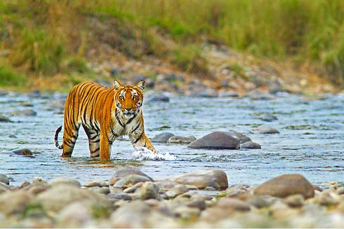 CORBETT-NATIONAL-PARK.jpg