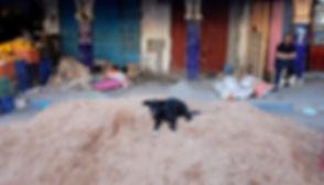 stray dog, morocco, smimou, essaouira