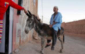 morocco, donkey, amazigh, berber, tinouainane