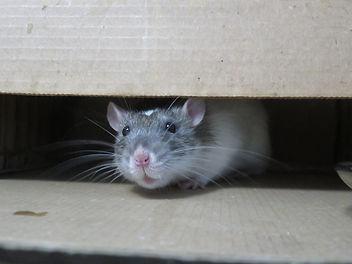 ネズミ4.jpg