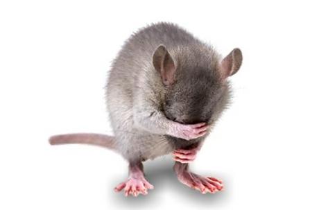 ネズミ.png