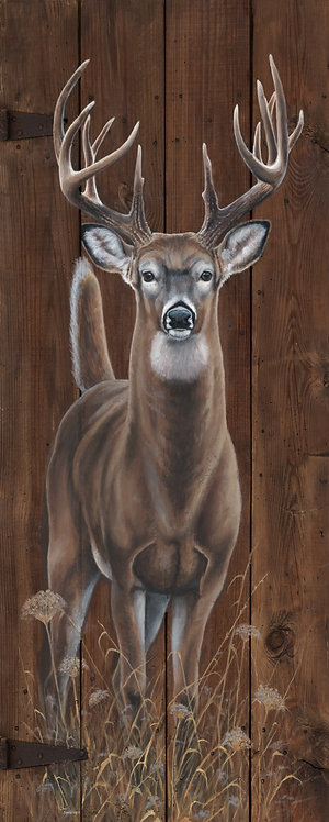 """White Tail """"Out of the Woods"""""""