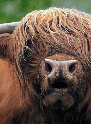 Scottish Highland