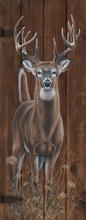 """Whitetail - """"Out of the Woods"""""""