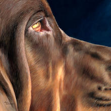 Dixie Delight Bloodhound