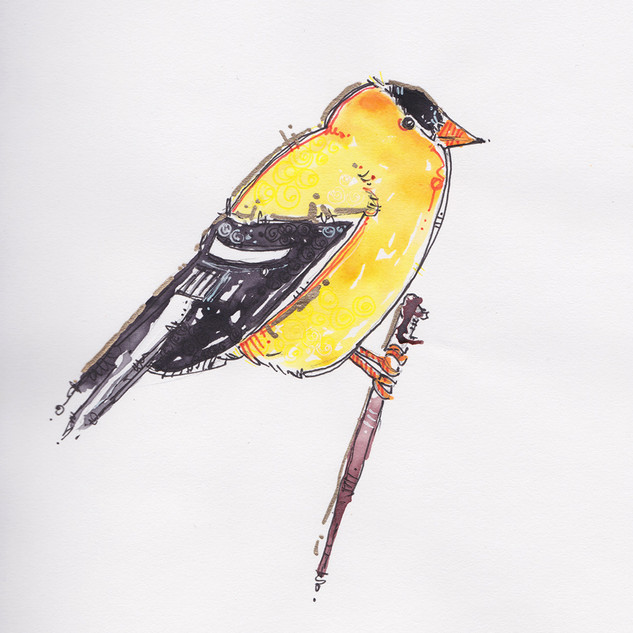 Goldfinch-web.jpg