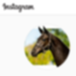 Instagram foalforsale.com