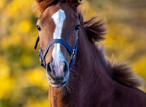 Foal sale is still in full swing