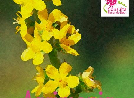 Agrimonia, el remedio que nos descubre el dolor y nos permite la alegría