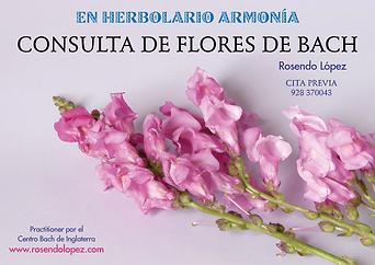 Flores de Bach en Las Palmas