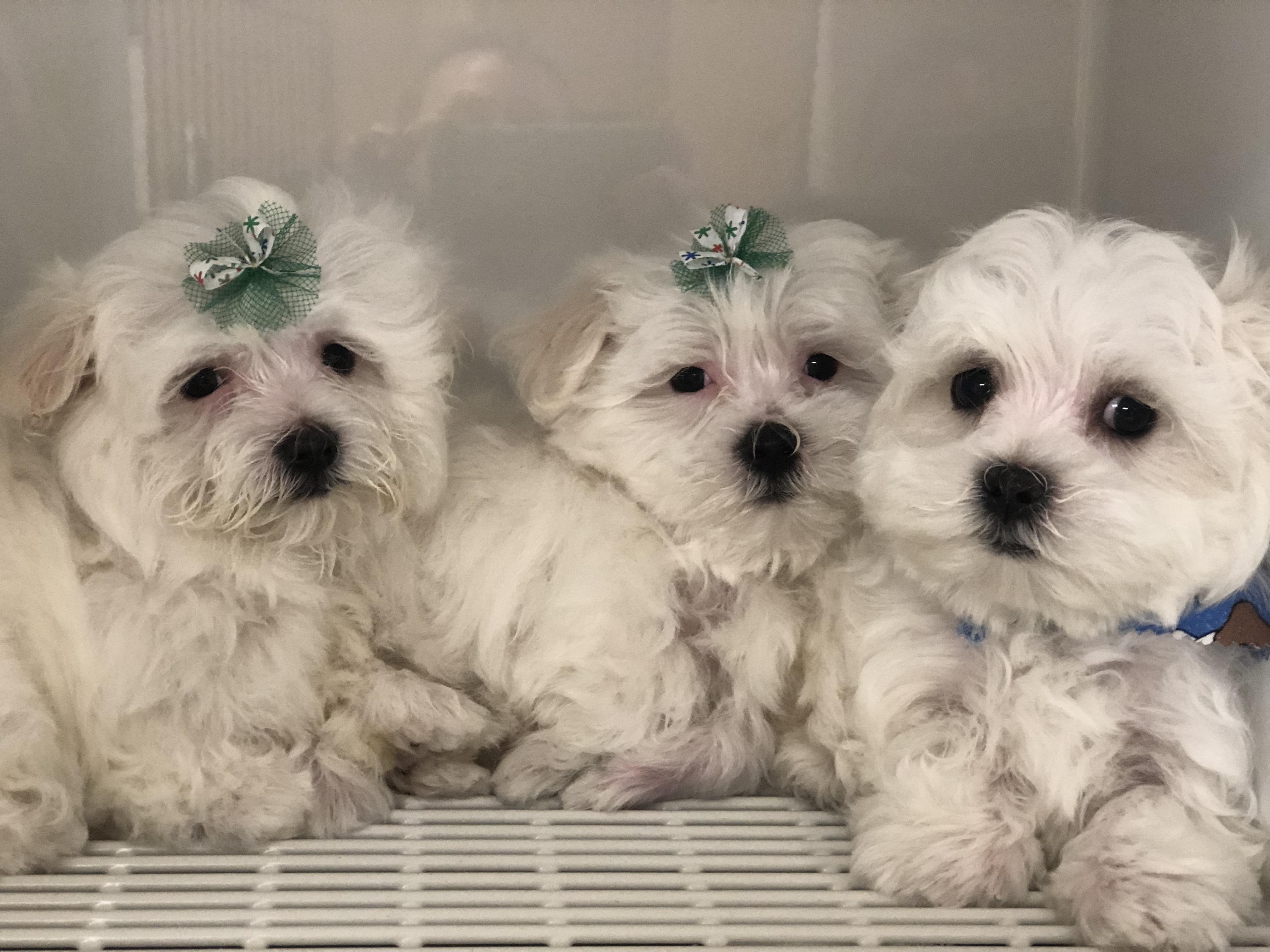 1st xmas pups