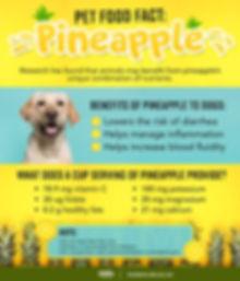 pineapple 4 pets.jpg