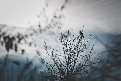 raven-4874366_1920.jpg