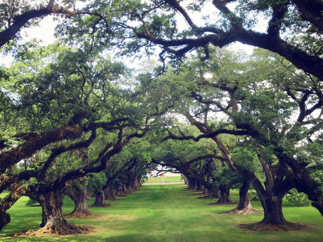 Oak Alley Plantation: Stories Behind the Trees