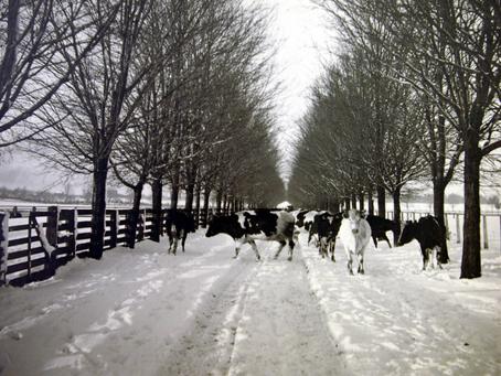 E.D. Tillson's Model Farm Continued: The Brick Barn