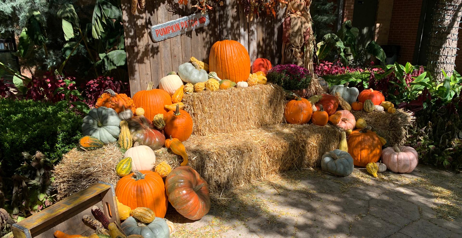 ABG PumpkinFest