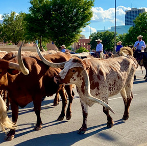 f819ddCattle Drive Photo Contest Submission