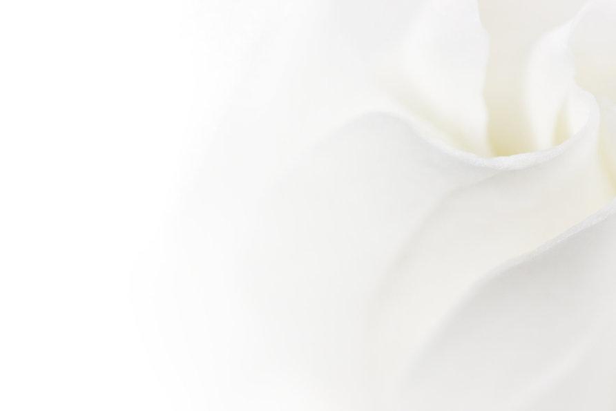 bigstock-soft-white-flower-background-w-