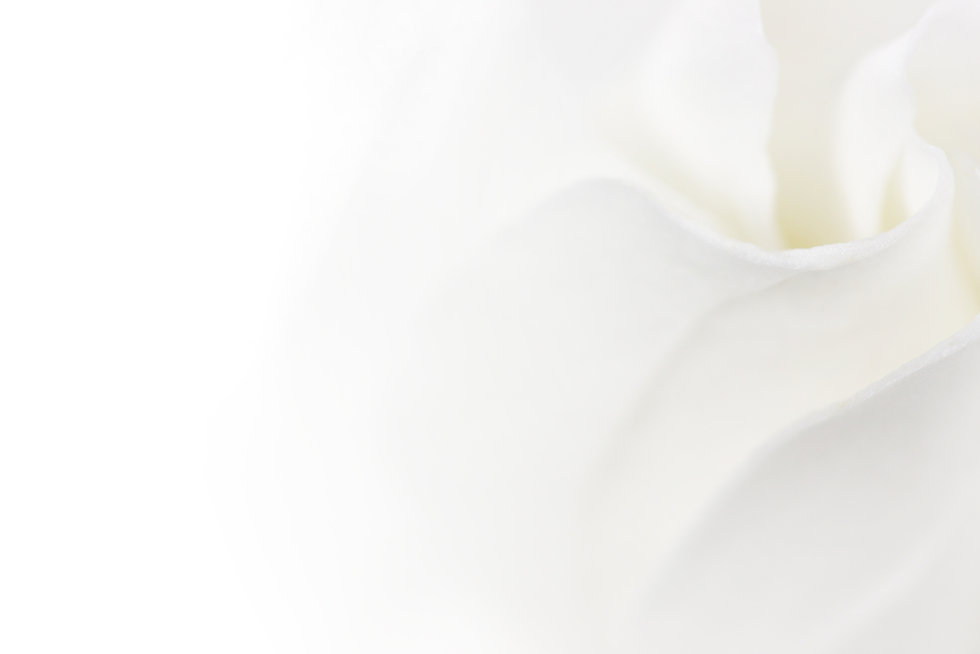 bigstock-soft-white-flower-background-w-