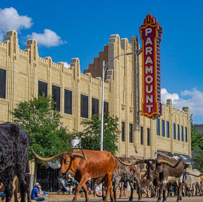edc1927Cattle Drive Photo Contest Submission