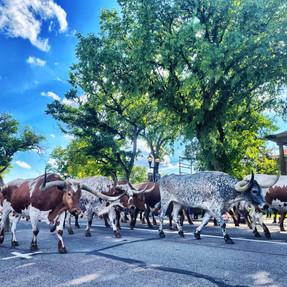 Cattle Drive Photo Contest SubmissionC3_3D8