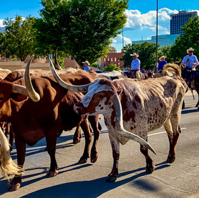 Cattle Drive Photo Contest SubmissionF
