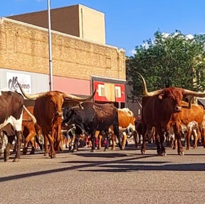 d2cd4Cattle Drive Photo Contest Submission