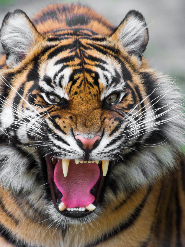 Learn Wildlife Photography