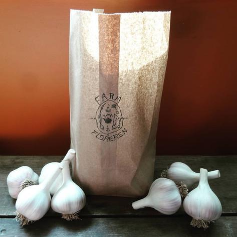 Garlic (Allium sativum var. Music)
