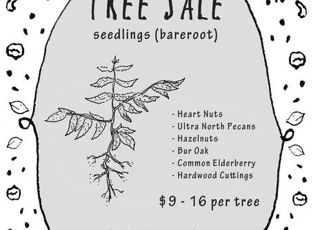 Spring Tree Seedling Sale