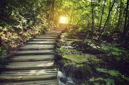 Wood path - Small.jpg