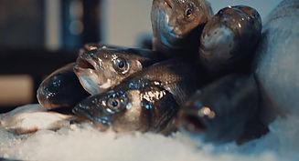 peixe.jpeg