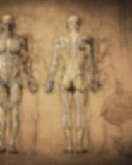 Deola AyurYoga - Dhatus & Srotas Body Tissues & Channels