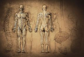 Dessin d'anatomie
