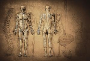 Hemp CBD & the Endocannabinoid System