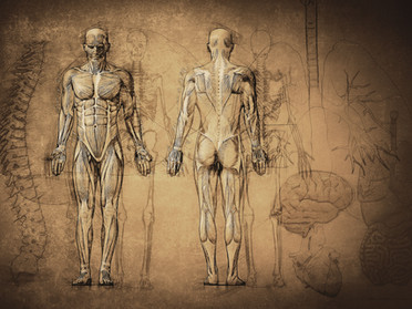 Muscle Balance & Flexibility Training