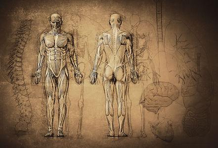 解剖学の描画