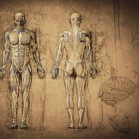 How to teach Anatomy with fewer resources