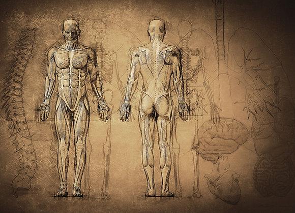 Anatomy & Physiology Diploma Home Study Course