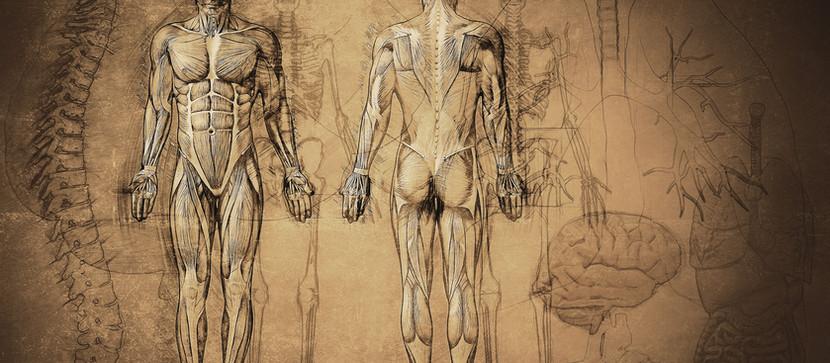 Organ Donation: We Need an Attitude Transplant